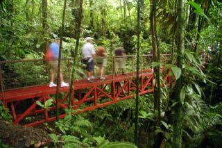 rainforest-walk